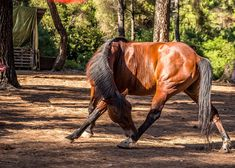 Ranch-Eros Farm: Close Encounters with Animals Close Encounters, Ranch, Greek, Horses, Island, Explore, Country, Animals, Guest Ranch