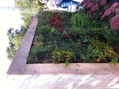 Verticale Tuin Intratuin : Beste afbeeldingen van verticale tuin gutter garden garden