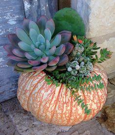 Variegated pumpkin centerpiece Cactus/succulents