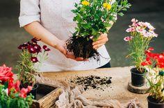 Votre jardin n'aura jamais été aussi beau après avoir utilisé du vinaigre. Vous serez étonné de tout ce que vous pouvez faire avec du vinaigre blanc.
