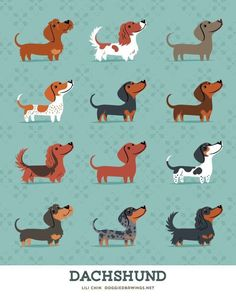 Doxie prints