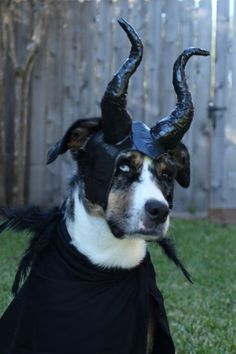 Maleficent Dog costu
