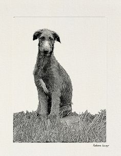 Young scottish deerhound. Infographisme - Site de manializa (© Marie-Lise Robert).