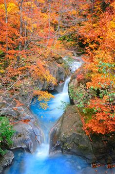 Limpid blue water flows in between Autumn leaves, Hakusan National Park, Hida, Gifu, Japan