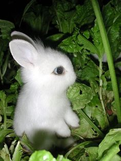 This pic reminds me of my 1st pet. A baby white rabbit I got when I was in first grade. She was all white with red eyes. I named her peppermint patty & she was my best friend.