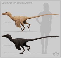 Velociraptor mongoliensis - color variation by ChrisMasna.deviantart.com on @deviantART