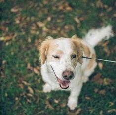 💙MATEO💙 es un peludo súper lindo💕 tierno😋 e inocente 😚es como un angelito😇 @tomas_y_mateo_criollos Los criollos son animales muy nobles y agradecidos, y siempre están demostrando amor por sus familiares y personas favoritas. . Dogs, Cute, Pets, Animales, Pet Dogs, Doggies