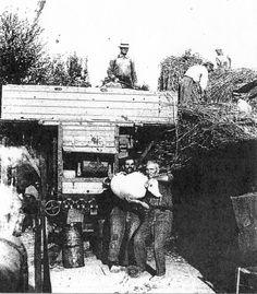 Contadini durante la battitura. Il grano, che esce dalla trebbiatrice, viene messo nei sacchi da portare al granaio - 1950.