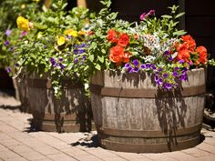 Barrel Planter Ideas - http://plant.dssoundlabs.com/barrel-planter-ideas/ : #WoodPlanter Barrel planter hanging with Garden planters is like displaying its own natural beauty while housing beautiful plants and flowers. Planters that are beautiful, yet practical are the best finds, and being Eco-friendly does not hurt either. Barrel planters, basin resin planters and fiber clay...