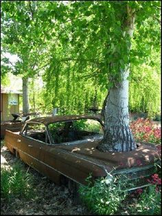 Cadillac / Tree, I wonder how long the car has been abandoned there, with the tree already grown quite large. Abandoned Cars, Abandoned Buildings, Abandoned Places, Rust In Peace, Rusty Cars, Growing Tree, Barn Finds, Street Rods, Rat Rods