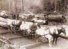 Oregon Coast Scenic Railroad Here is our 1887 Shay locomotive (#23) near Marysville, WA working the woods for the Stimson Mill Company. Photo was taken in the 1890's. Note they are transfering logs from the horse team to the railroad.