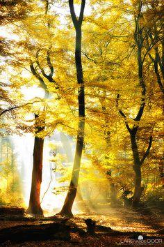 fall leaves + light
