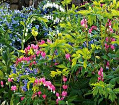 Spring Shade Garden