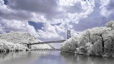 Bridge over white trees along a river (1920x1080, white, trees, river)  via www.allwallpaper.in