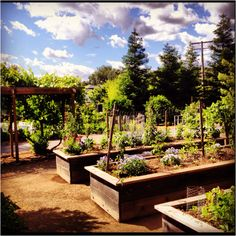 Raised garden beds. Photo from @dirtandmartinis