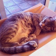 DIY Cat furniture projects