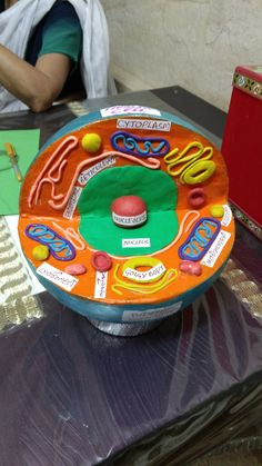 Human Cell 3d Animal Cell Project, Edible Cell Project, Plant Cell Project, Cell Model Project, Science Fair Projects Boards, Biology Projects, Human Cell Diagram, Plant Cell Model, Human Body Systems