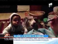 """Câinele care spune """"mama"""" - YouTube"""
