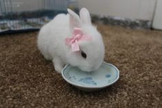 Little White Bunny with a Pretty Pink Bow