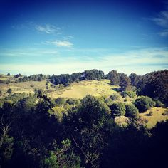 looking out into the Berkeley hills in Tilden Park.