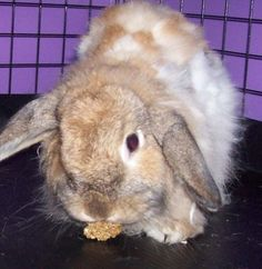 Bunneh's Bunny Rabbit Treats