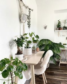 Decorate your home office with these low manintenance plants that clean the air and are hard to kill! #homeofficedecor #homeofficeideas #homeofficeplants #lowmaintenanceplants #hardtokillplants #aircleaningplants
