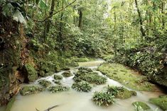 A place to ponder. Amazon Rainforest Plants, Land Use, Climate Change Effects, Tree Roots, South America, Pond, Wildlife, Places, Water