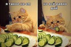 #zoomisto #zoomistocomua #юмор #прикол #интернетзоомагазин #зоотовары #питомец #домашнийпитомец #животные #кот #котенок #смешнойкот #котан #котяра #пушистый  Интернет-зоомагазин ZooMisto - https://zoomisto.com.ua