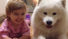 Samoyed puppy and baby are partners in CUTE! (VIDEO)