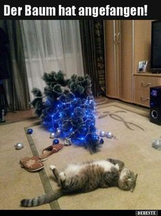 The Signs Of Another Successful Holiday Pawffice Party - LOLcats is the best place to find and submit funny cat memes and other silly cat materials to share with the world. We find the funny cats that make you LOL so that you don't have to. Cute Funny Animals, Funny Animal Pictures, Funny Cute, Cute Cats, Super Funny, Funniest Animals, Mom Funny, Christmas Cats, Christmas Humor
