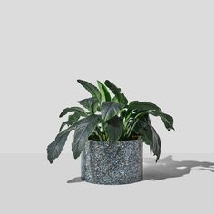 Confetti Planter by Nicholas Karlovasitis & Sarah Gibson – DesignByThem Outdoor Pots, Outdoor Spaces, Outdoor Living, Indoor Outdoor, Recycled Plastic Furniture, Time Design, Confetti, Recycled Materials, Recycling