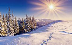 Słońce, Choinki, Niebo, Śnieg