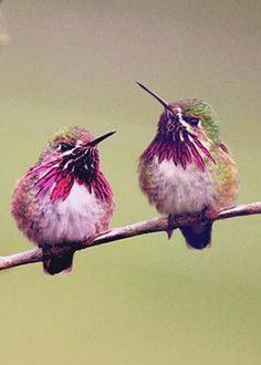 Hummingbirds by Karen Goodwin