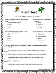 3rd grade science plants worksheets google search summer brain plant science science. Black Bedroom Furniture Sets. Home Design Ideas