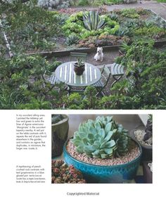 Succulent Container Gardens: Design Eye-Catching Displays with 350 Easy-Care Plants: Debra Lee Baldwin: 9780881929591: Amazon.com: Books