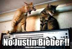 Funny No Justin Bieber Angry Cat Meme Joke Picture