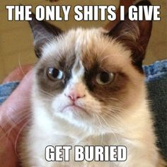 Grumpy Cat Meme (14 Photos) (10)
