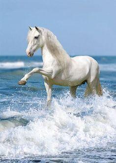 horses  http://www.geekzu.com/
