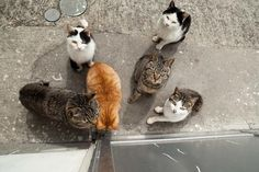 There's an Island in Japan called Cat Heaven Island. Click through to see why. Sooo adorable!