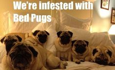 """Click visit site and Check out Best """"Pug"""" T-shirts. This website is excellent. Tip: You can search """"your name"""" or """"your favorite shirts"""" at search bar on the top."""