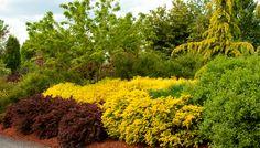 Monrovia Easy Care Garden