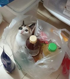 You bought a cat at the quickie mart!