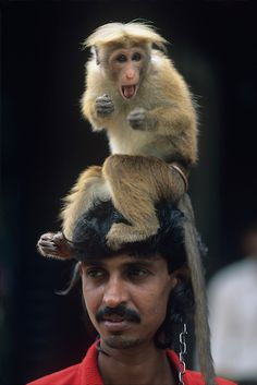 performer with trained monkey in town of kegalle | sri lanka | foto: paul souders