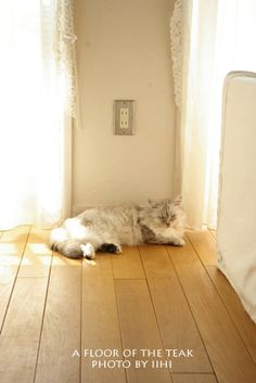 ペット目線で床材選び   いいひブログ - いいひ住まいの設計舎