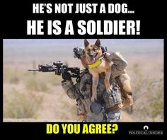 War dogs or military dogs are special. They loyally serve their handlers and their country. Here are 10 dogs that are proven military heroes, thanks to Anna Martin… 'Military dogs' or 'War d… Military Working Dogs, Military Dogs, Police Dogs, Military Service, Military Honors, Military Personnel, Military Police, Military Veterans, Usmc