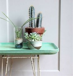 succulents, tray table