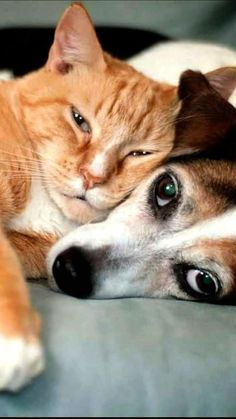 Many dogs and cats can coexist peacefully, but you'll keep everyone safe and m. - Animaux de compagnie -Pets and Farm Animals - Cute cat Cute Funny Animals, Funny Animal Pictures, Cute Baby Animals, Animals And Pets, Farm Animals, Funny Cats, Cute Cats And Dogs, Cats And Kittens, Dogs And Puppies