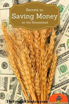 Here's how we've spent very little money creating our dream homestead. #homesteading #frugal