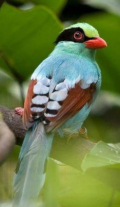 Beautiful Bird  love the colors!