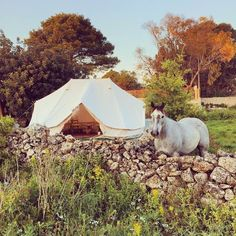 The Emperor 6m Twin Bell Tent, the epitome of glamping! - Breathe Bell Tents Australia Romantic Bed And Breakfast, Bell Tent, Festival Camping, Queen Mattress, Down South, Wall Canvas, Emperor, Tents, Glamping